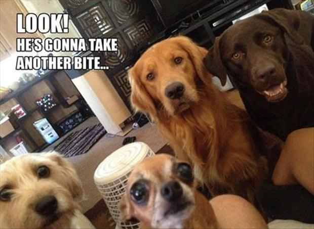 dogs watching you eat, funny pictures