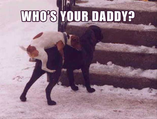 dogs, whos your daddy