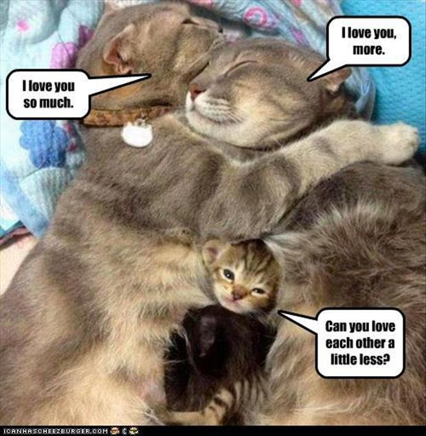 family of cats, funny animal pictures
