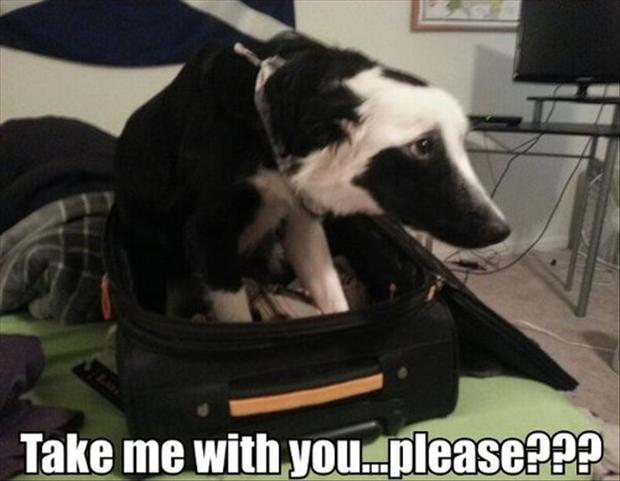 funny animal pictures, dog in suitcase