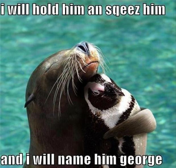 funny animal pictures, love