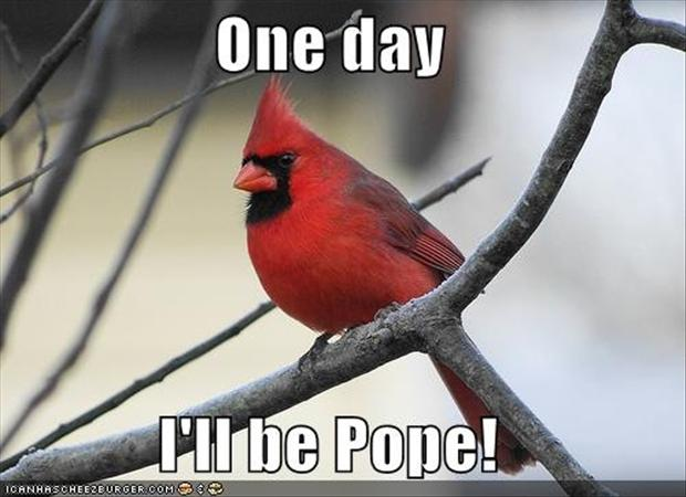 funny bird pictures