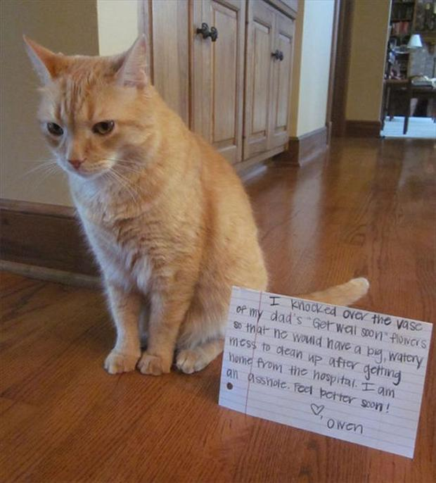 funny cat shaming, dumpaday (11)
