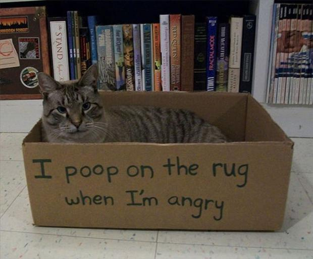 funny cat shaming, dumpaday (12)