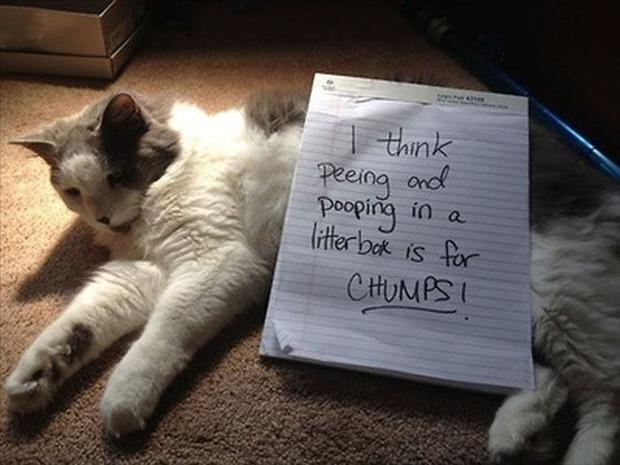 funny cat shaming, dumpaday (13)