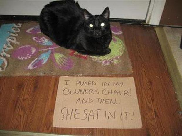 funny cat shaming, dumpaday (14)