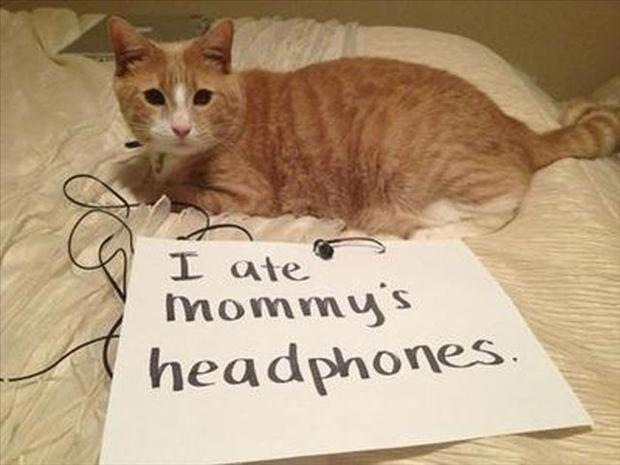 funny cat shaming, dumpaday (15)