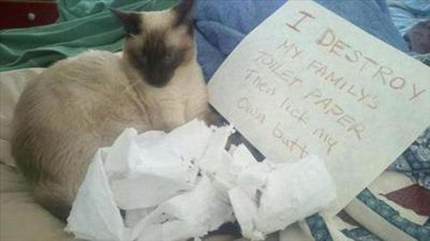 funny cat shaming, dumpaday (17)