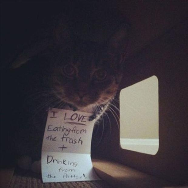 funny cat shaming, dumpaday (18)
