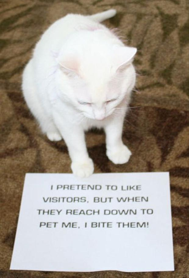 funny cat shaming, dumpaday (2)