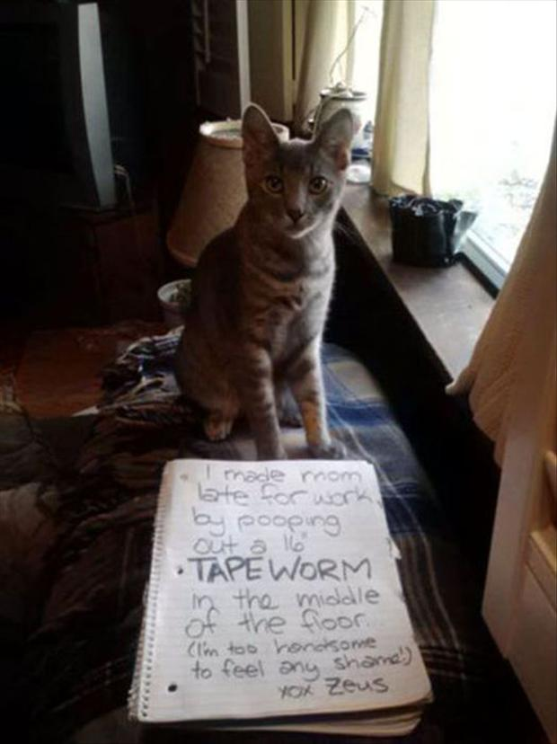 funny cat shaming, dumpaday (20)
