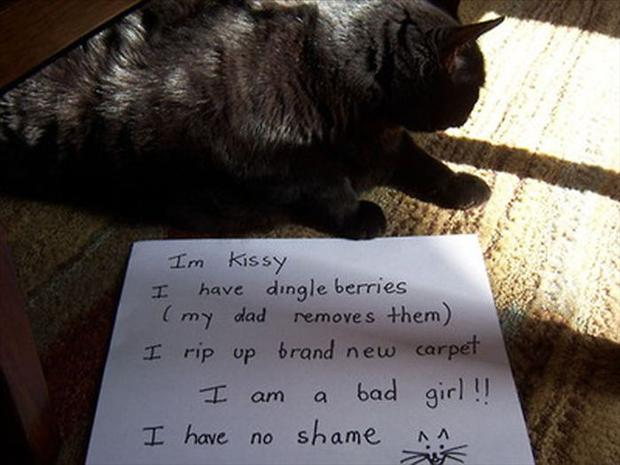 funny cat shaming, dumpaday (22)