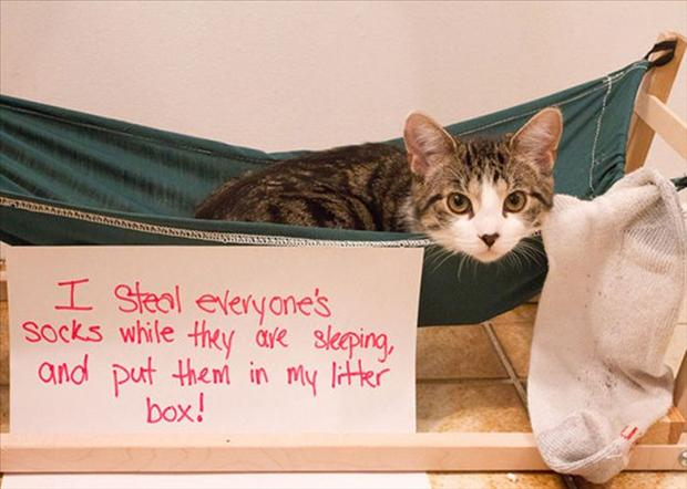 funny cat shaming, dumpaday (25)