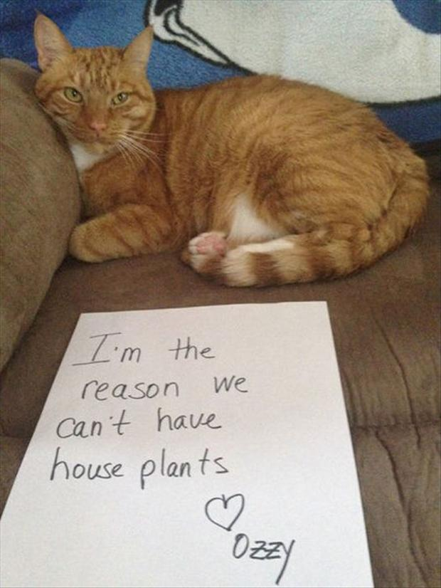 funny cat shaming, dumpaday (4)
