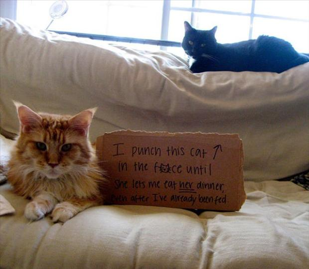 funny cat shaming, dumpaday (6)