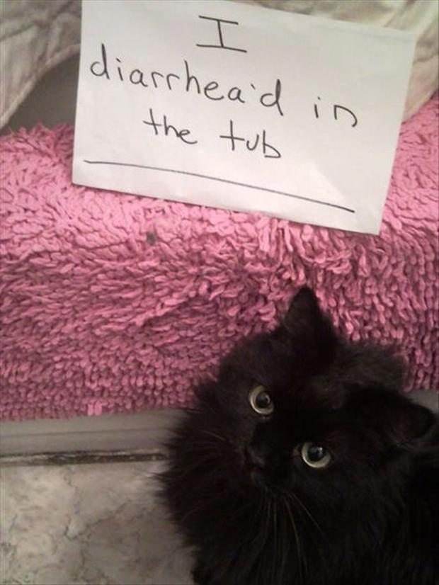 funny cat shaming, dumpaday (7)