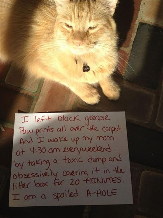 funny cat shaming, dumpaday (9)