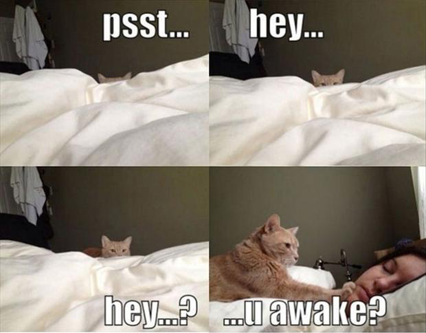 funny cat wakes you up