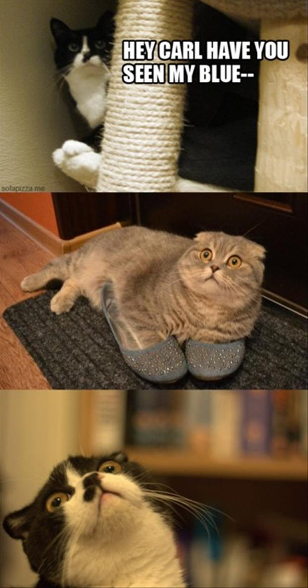 funny cat wearing shoes,