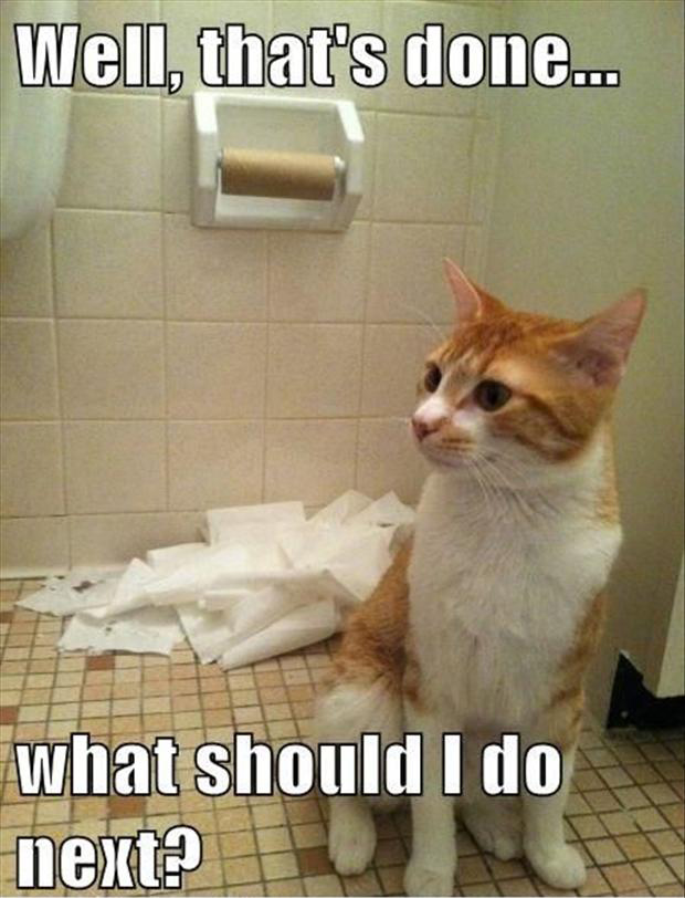 funny cats and toilet paper