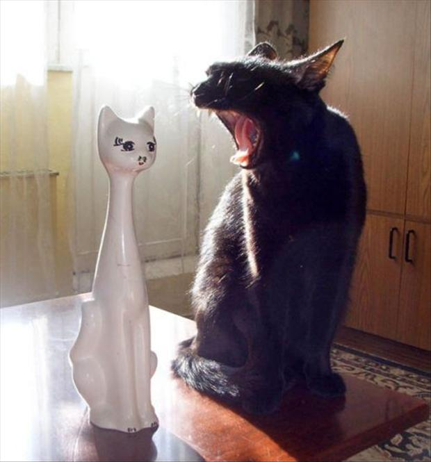 funny cats, black cat and white cat