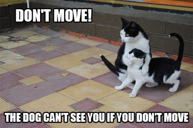 funny cats, do not move