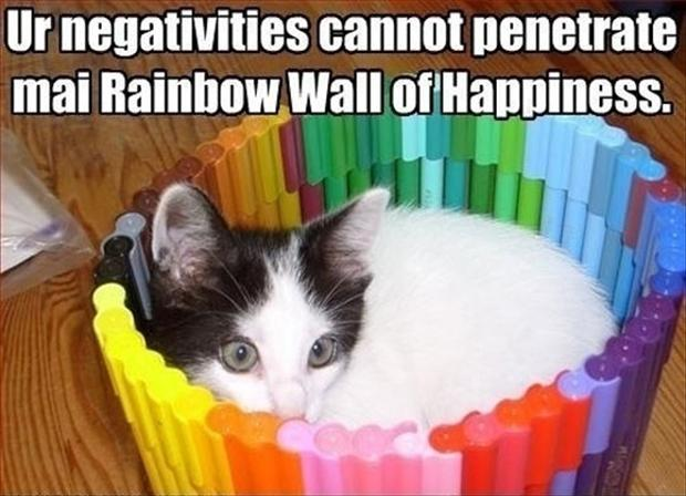 funny cats in a rainbow wall