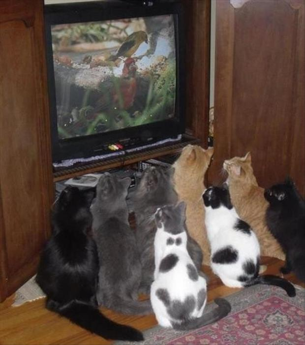 funny cats watching tv
