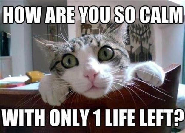 funny cats with 9 lives