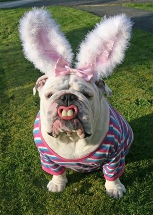 funny dog dressed like the easter bunny - Dump A Day