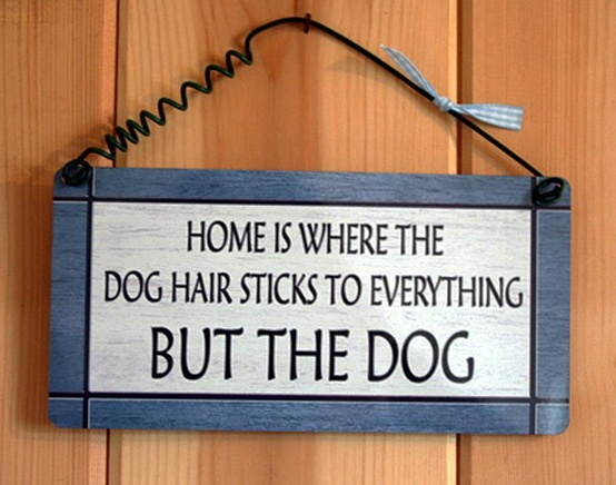 funny dog hair quotes