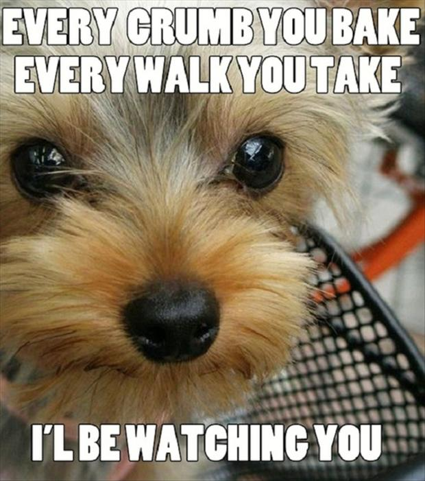 funny dog is watching you cook
