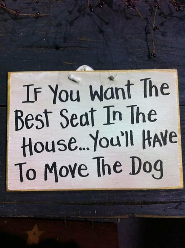 Funny dog quotes