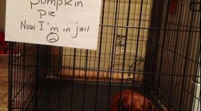 Best Of, &#8220;Dog Shaming&#8221; &#8211; 15 Pics