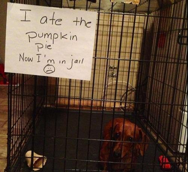 funny dog shaming thumb