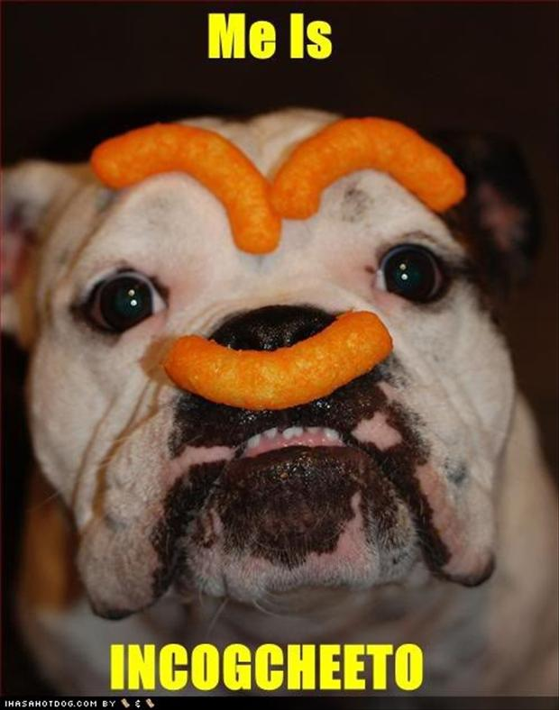 funny dog with cheetoh