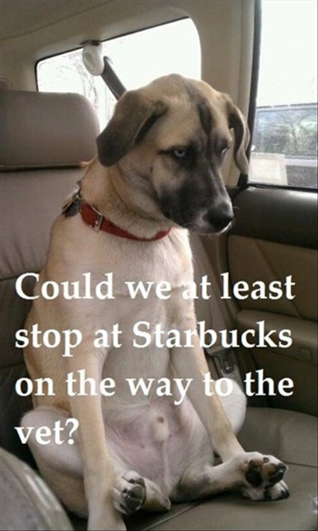 funny dogs, can we at least stop by starbucks