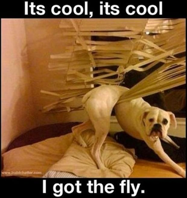 http://www.dumpaday.com/wp-content/uploads/2013/01/funny-dogs-i-got-the-fly.jpg