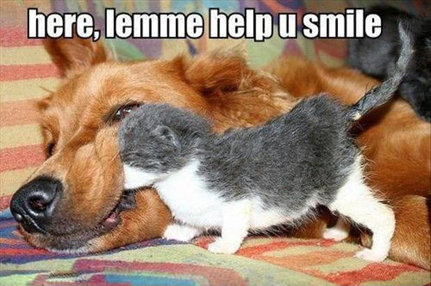 funny dogs, smile