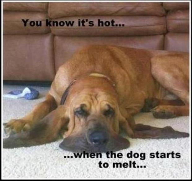 funny dogs, you know its hot when the dog starts to melt