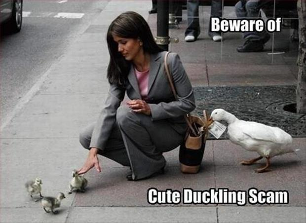 funny duck pictures