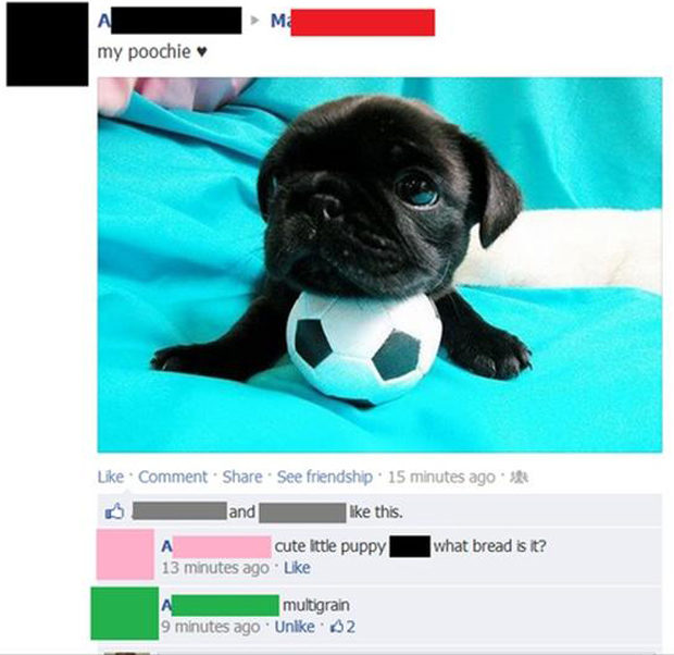 funny facebook status updates, cute puppy