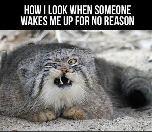 funny good morning pictures, lolcats - Dump A Day