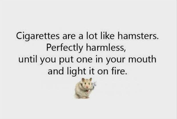 funny hamsters, quotes