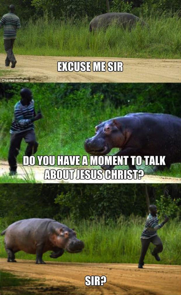 funny hippo pictures