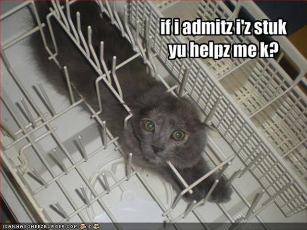 funny kitchen, cat stuck in dishwasher