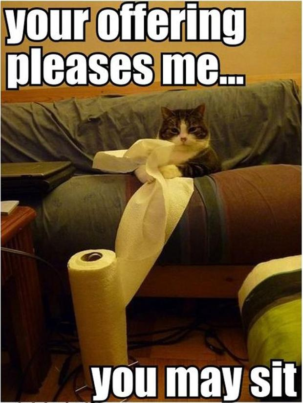 funny lol cats, playing with toilet paper