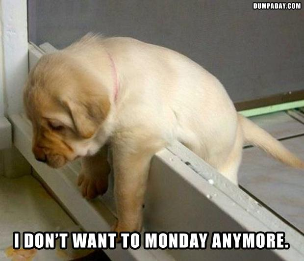 funny-monday-pictures