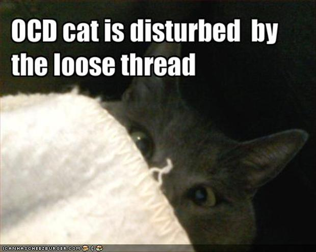 funny ocd pictures, cat