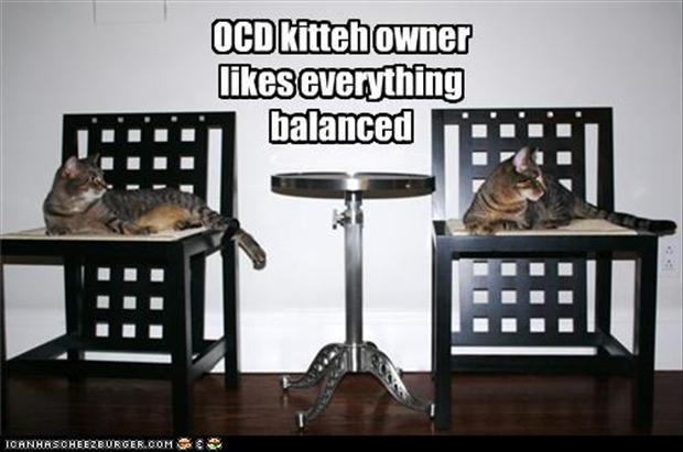 funny ocd pictures, kitten tower